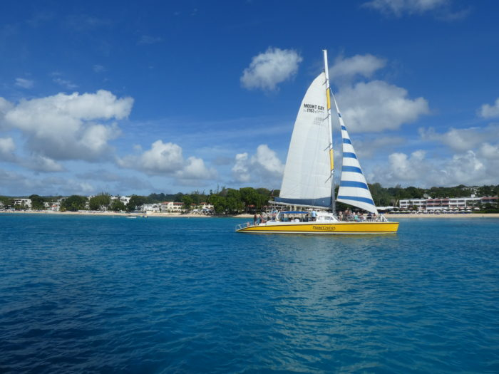 Swimming With Turtles In Barbados - Tiami Catamaran