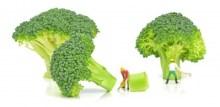 high alkaline foods list