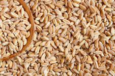 Is farro gluten free
