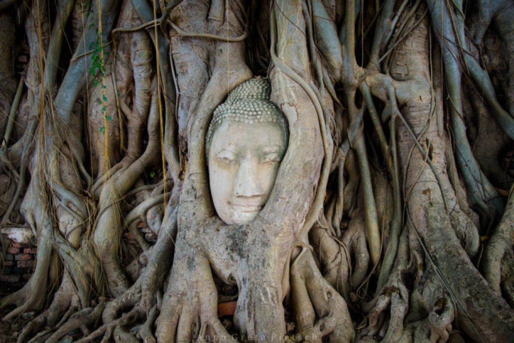 Buddhakopf_Ayutthaya