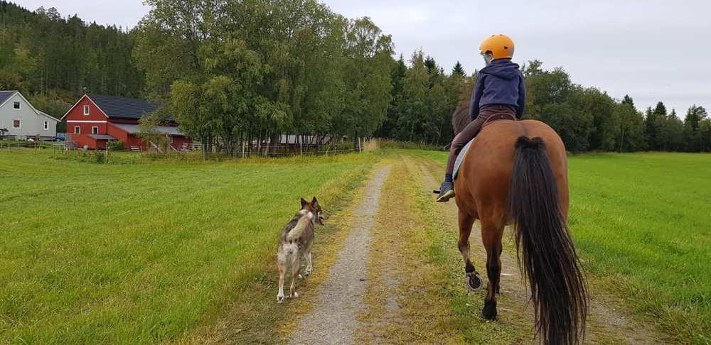 hverdagspuls-hest