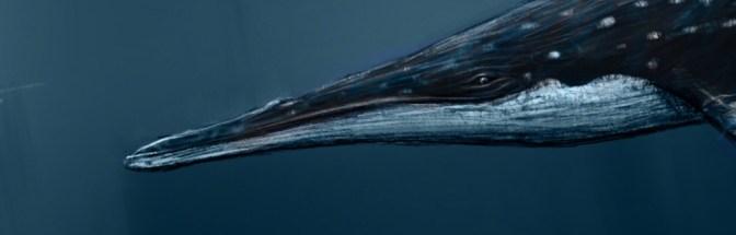 Tokarahia: a Sleek, Small Ancestor of the Largest Animal in History
