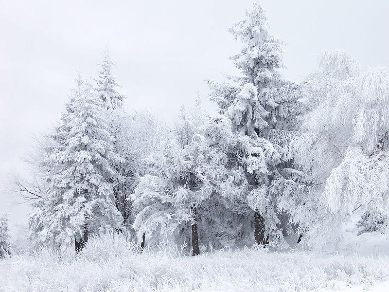 Winter scene. Psy guy, CC BY-SA 3.0, via Wikimedia Commons
