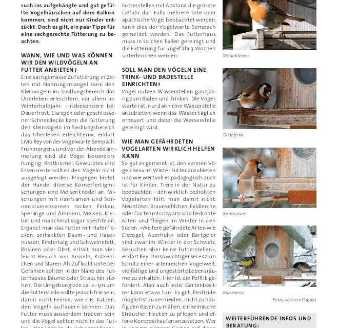 Wildvögel füttern – aber richtig