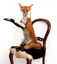 7.Untitled (Fox)