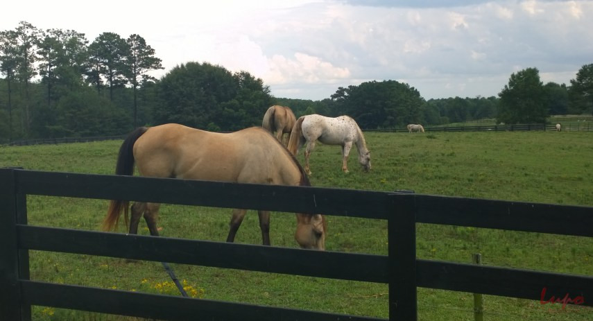 Serenbe Horses #2, 17 August 2014