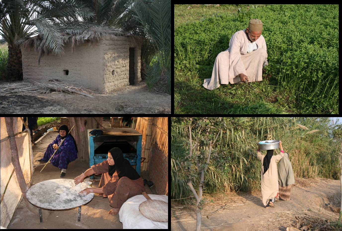 Egyptian farm life