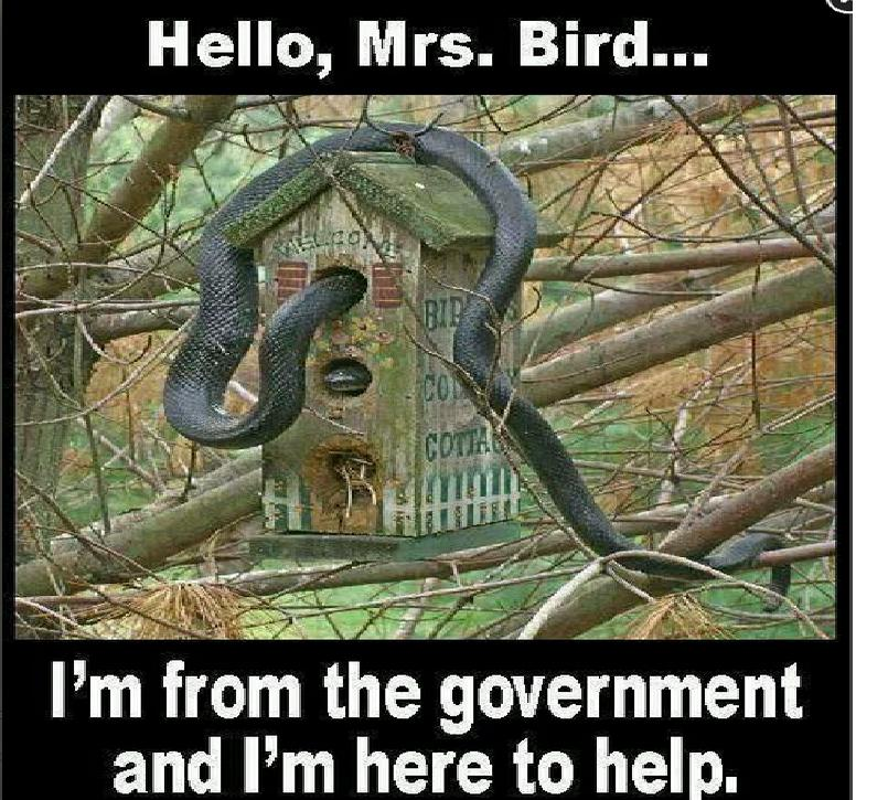 I'm from the government