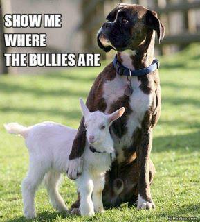 Dog & Goat