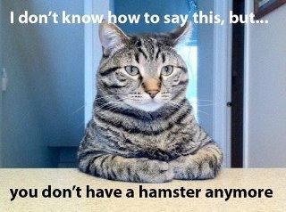 Hamster gone!