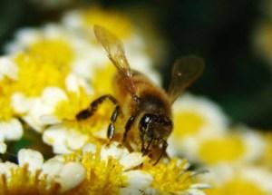 Bee_400