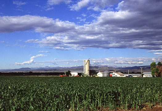 Corn production in Colorado.  Photo by Scott Bauer.