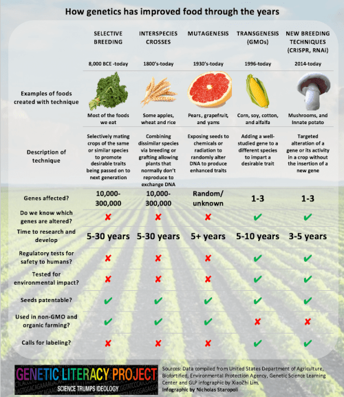 small resolution of food and genes large