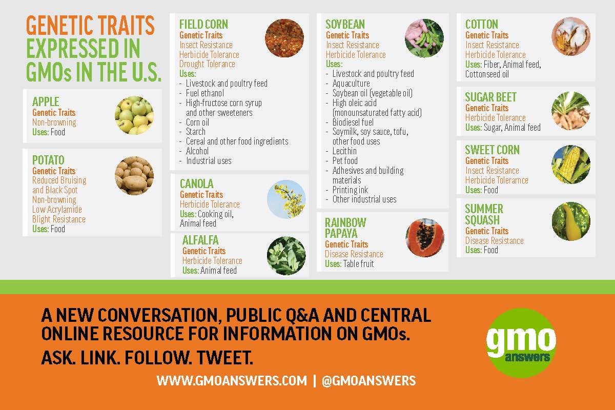 10 Gmo Crops And Their Impact On Our Food