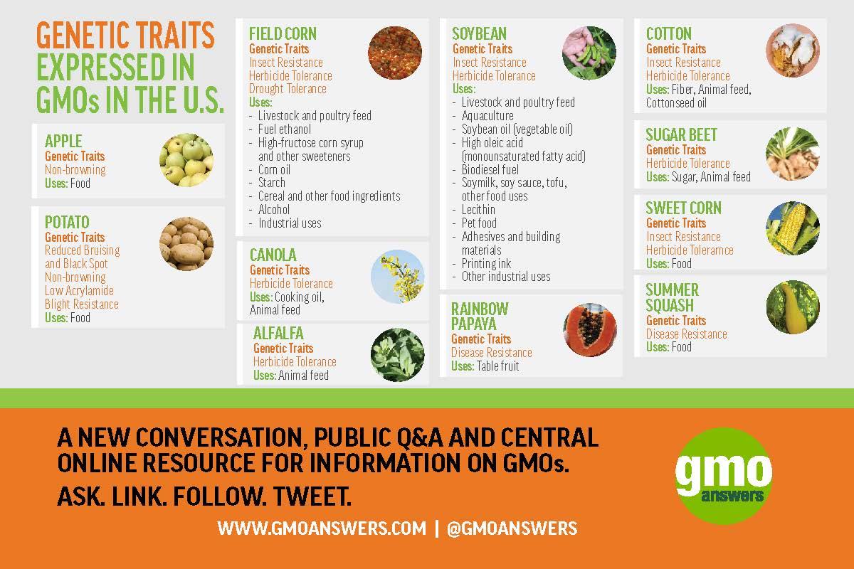 Corn Seed Worksheet