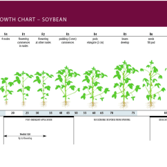 Corn Plant Diagram How To Read Basic Wiring Diagrams Of Cotyledon Get Free Image About