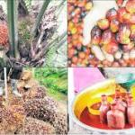 Palm Oil Export Business In Nigeria And All You Need To Know