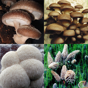 Web Special Sale Mushroom Growing Kits