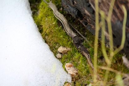 Snow on Moss