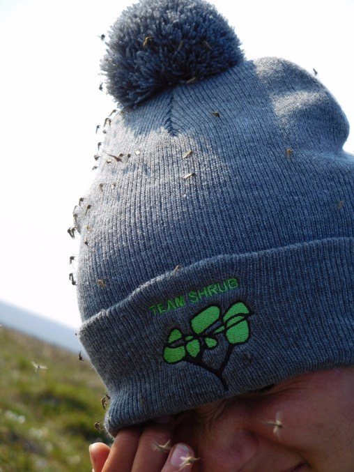 Team Shrub hats featuring a lovely embroided logo, an awesome pompom and sadly no insect-repellent coating.