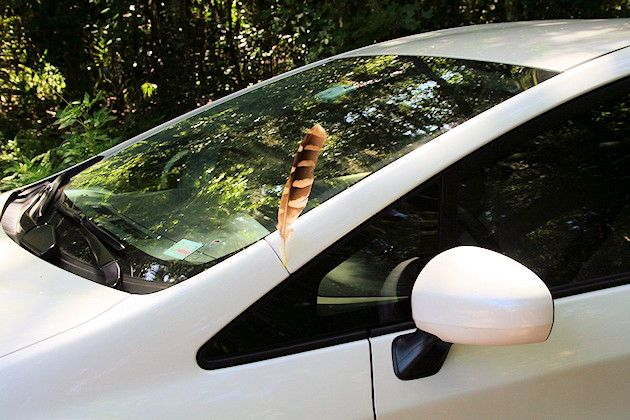 Paracletia - Find God in Times of Waiting - Session 6 - God's sign of hope: a hawk feather miraculously stuck in the car