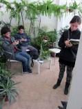 taller permacultura urbana lenguage de patrones san vicente 05 - small