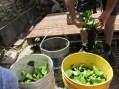 macetas de cubiertas soluciones practicas tomates 10