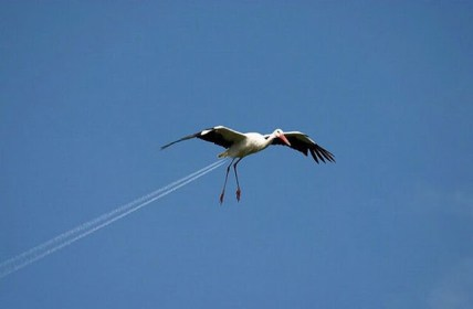 Fastest. Bird. Ever. (Mikey)