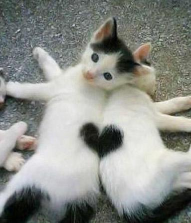 The Love Cats