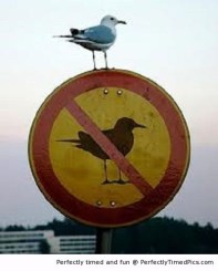 Breaking the law! Breaking the law! (Perfectly Timed Photos)