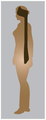 vav-spine