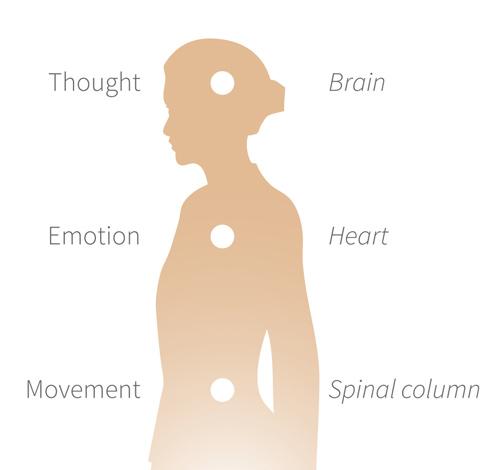 three-brains