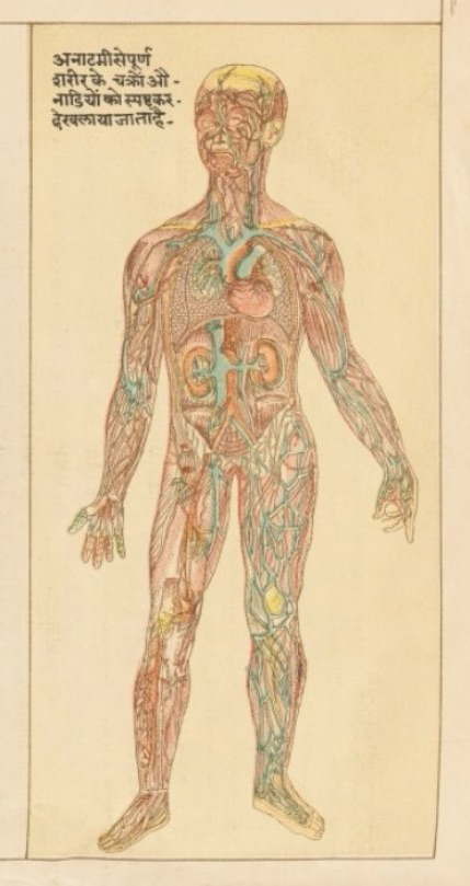 hindu-anatomy