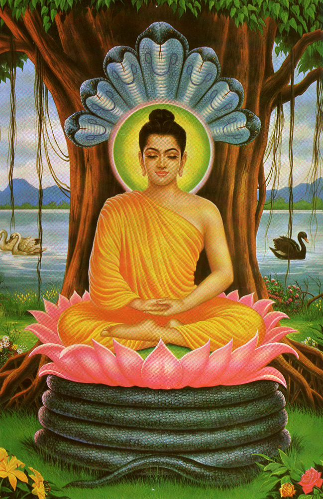 buddha-serpents-meditating