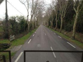 Tree lined road into Tarascon