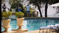 Elephant close by the pool
