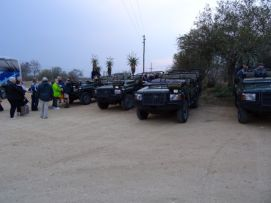 4WDs lined up to start our Safari