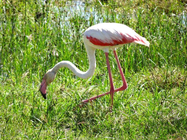 130825 Lake Nakuru to Maasai Mara