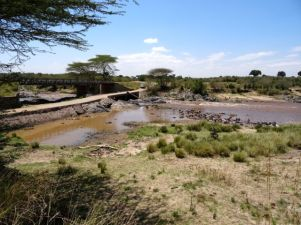 Why don't the wildebeest use the bridge?