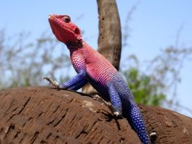 The new fashion in lizard dress