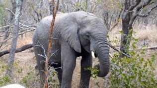 Elephant - another of The Big Five