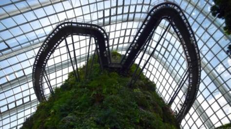Walkways around Forest Dome