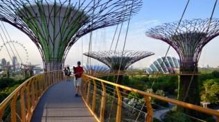 The skywalk.