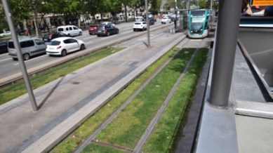 Notice the grass between the tram tracks