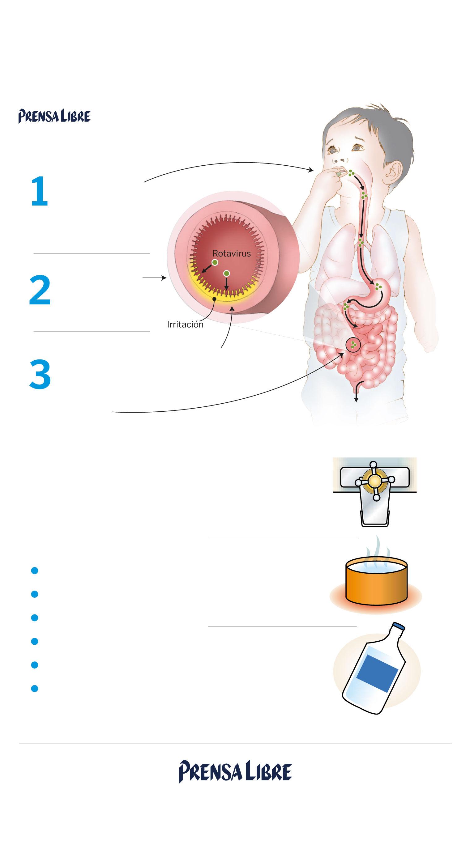 Ante el aumento de casos, ¿Cómo prevenir el contagio del rotavirus ...