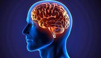 Resultado de imagen para foto del cerebro