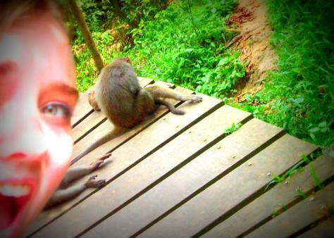 The first time I ever saw a wild monkey. I was so excited I forgot how cameras work.
