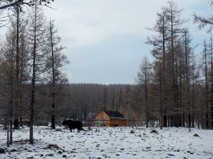 Ut's one-room home, no electricity or running water, in northern Mongolia