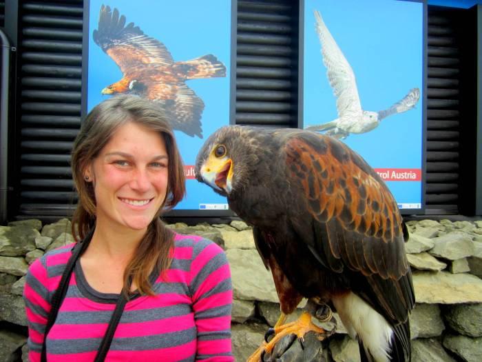 Riegersburg Falconry Austria