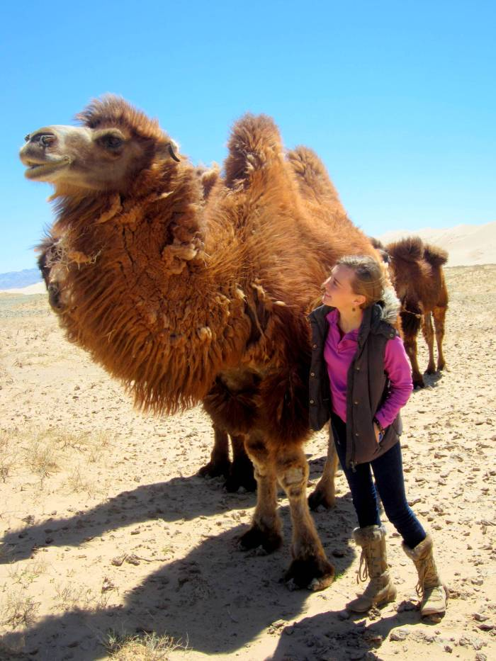Trying to befriend the camels in Khongoriin Els, Gobi Desert